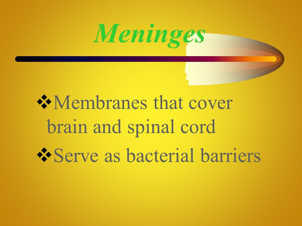 Meninges Membranes that cover brain and spinal cord