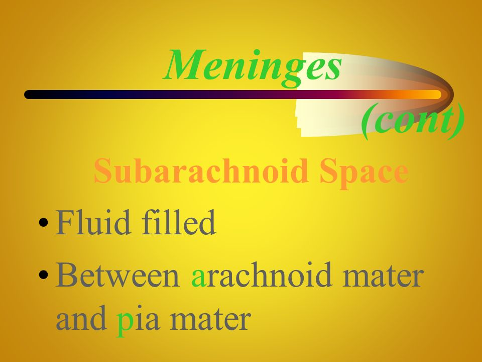 Meninges (cont) Subarachnoid Space Fluid filled