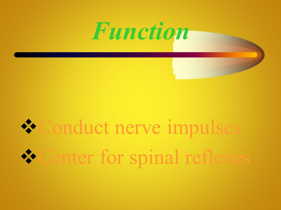 Function Conduct nerve impulses Center for spinal reflexes