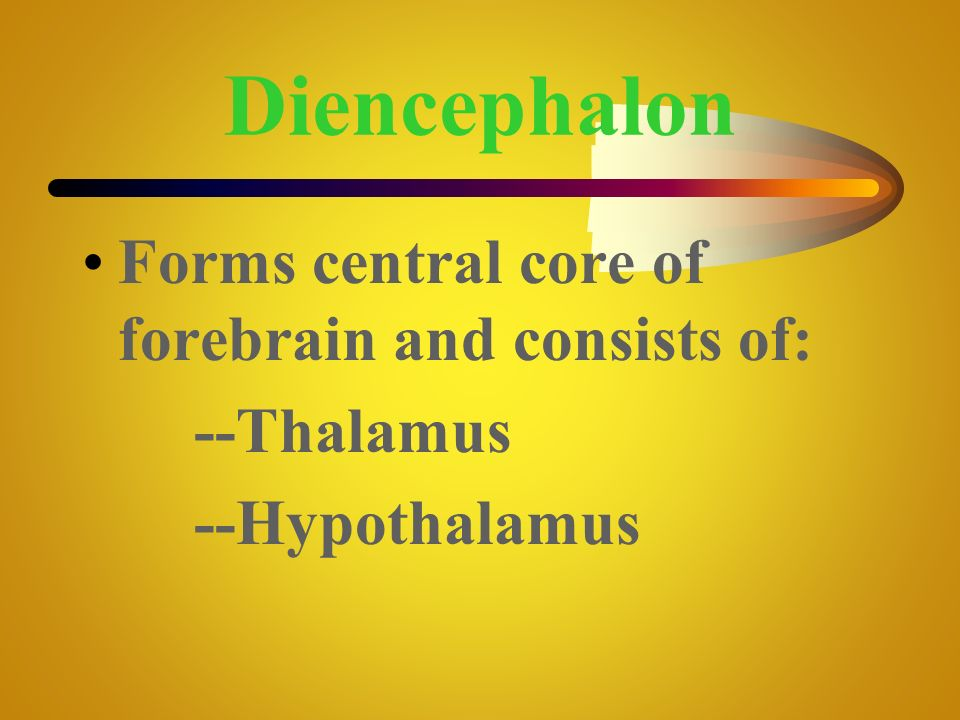 Diencephalon Forms central core of forebrain and consists of: