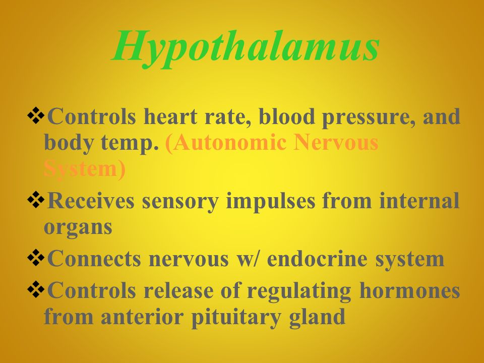 Hypothalamus Controls heart rate, blood pressure, and body temp. (Autonomic Nervous System) Receives sensory impulses from internal organs.
