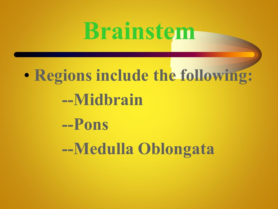 Brainstem Regions include the following: --Midbrain --Pons