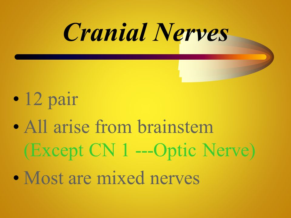 Cranial Nerves 12 pair All arise from brainstem (Except CN 1 ---Optic Nerve) Most are mixed nerves