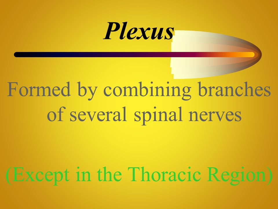 Plexus Formed by combining branches of several spinal nerves