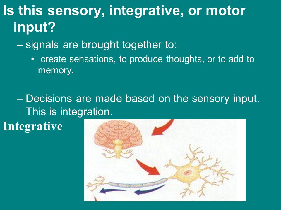 Is this sensory, integrative, or motor input