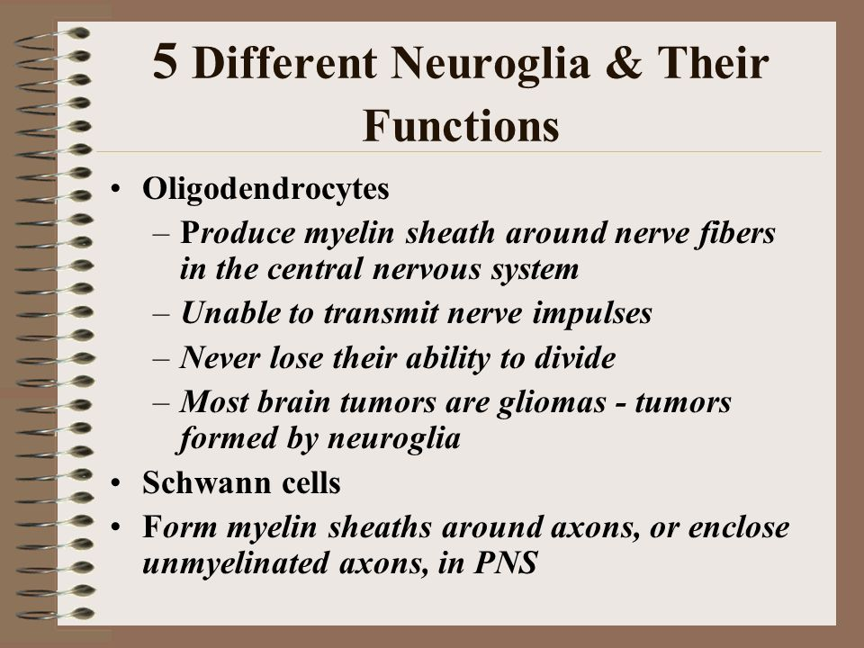 Nervous System Review. - ppt video online download