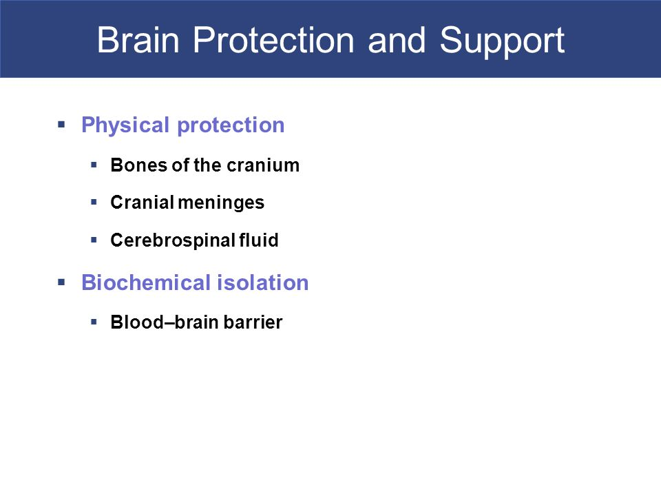 Brain Protection and Support