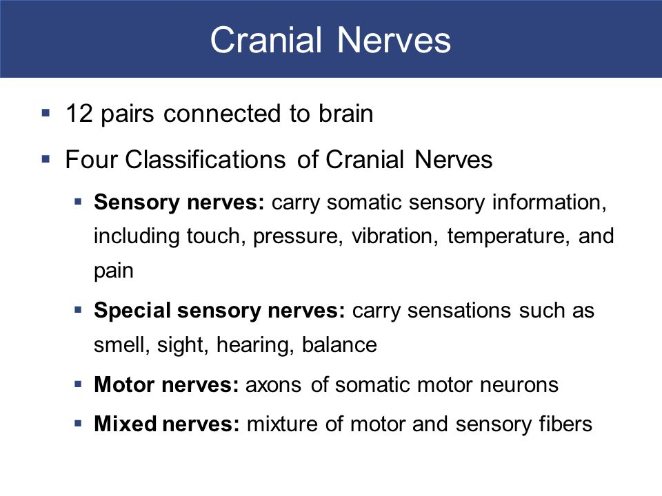 Cranial Nerves 12 pairs connected to brain