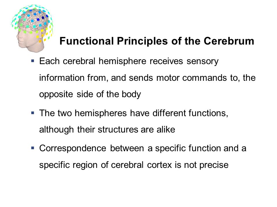 Three Functional Principles of the Cerebrum