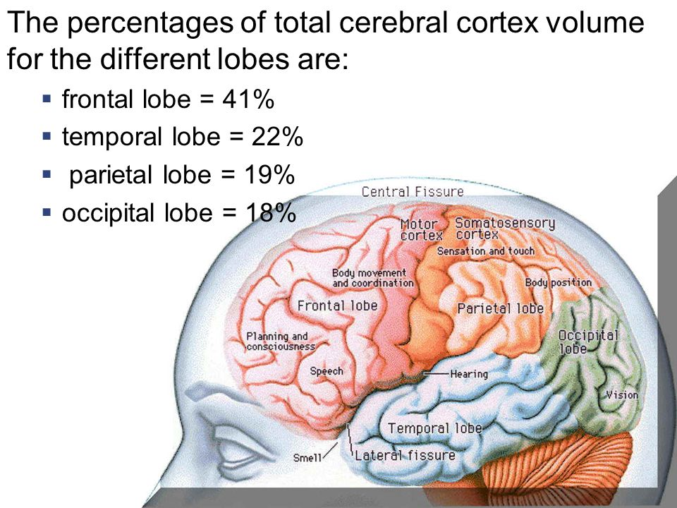 The percentages of total cerebral cortex volume for the different lobes are: