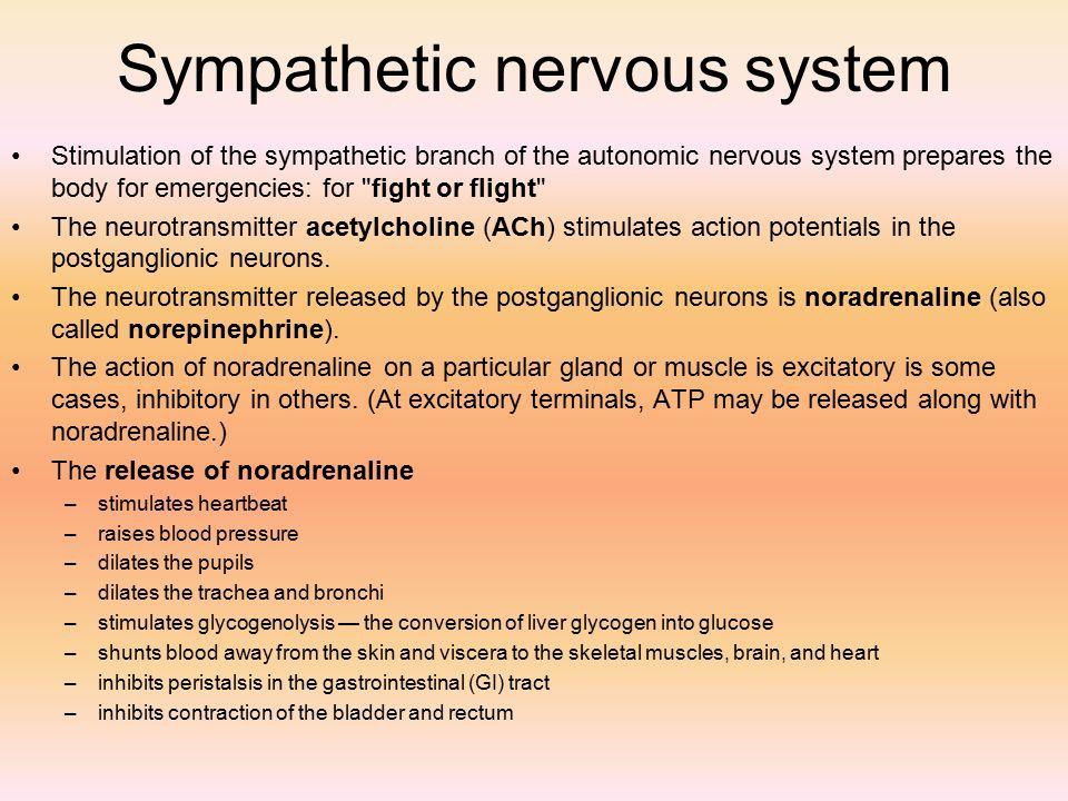 NERVOUS SYSTEM I & II Chapter 10 & ppt download