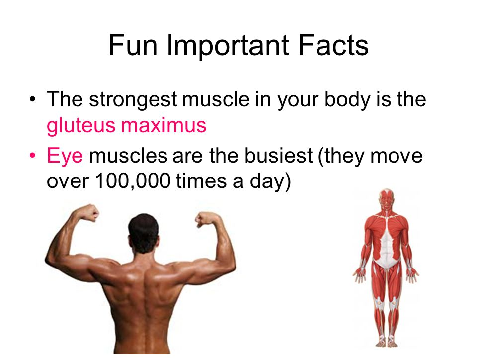 the human body. - ppt download, Cephalic Vein