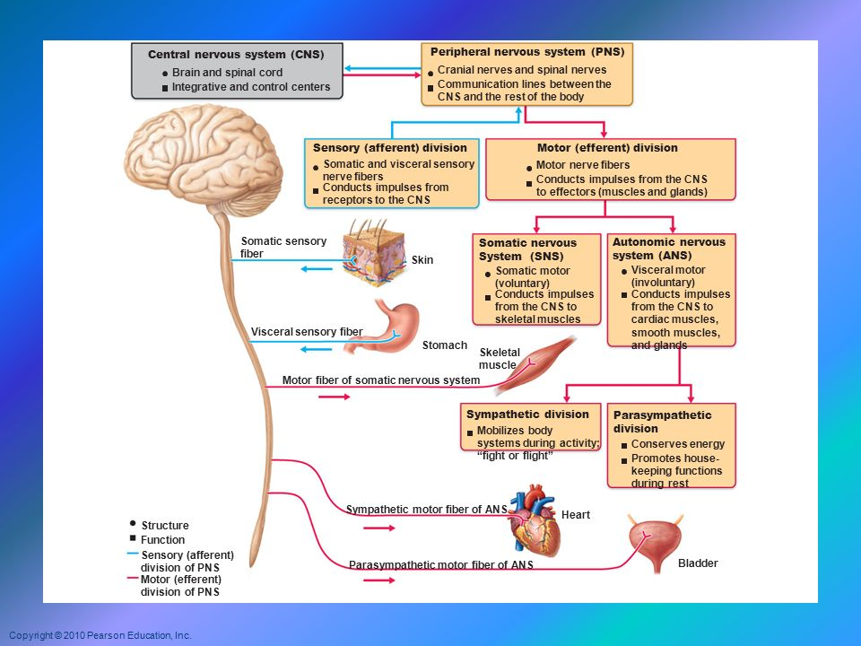 central nervous system Drugs interact with the brain and body to alter moods, emotions, and behaviors by changing brain chemistry and a person's perceptions, and by impacting how.
