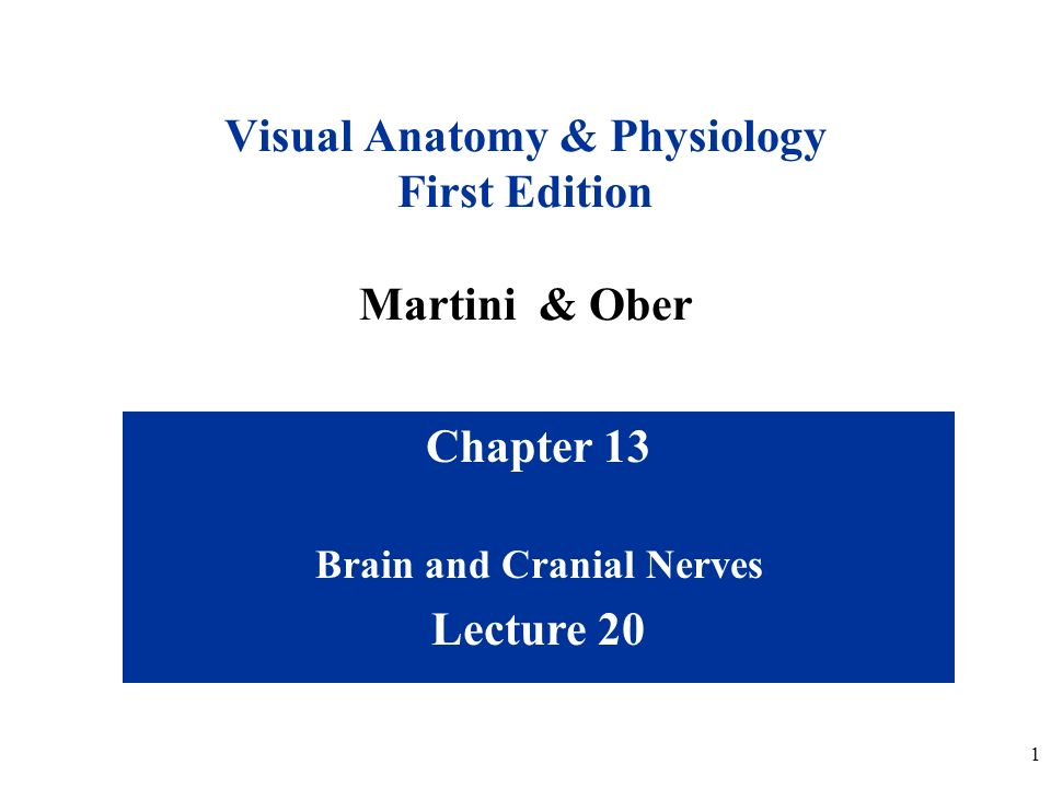 Chapter 13 Lecture 20 Brain and Cranial Nerves - ppt video online ...