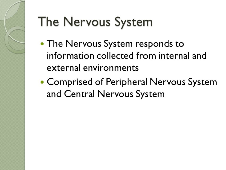 The Nervous System The Nervous System responds to information collected from internal and external environments.
