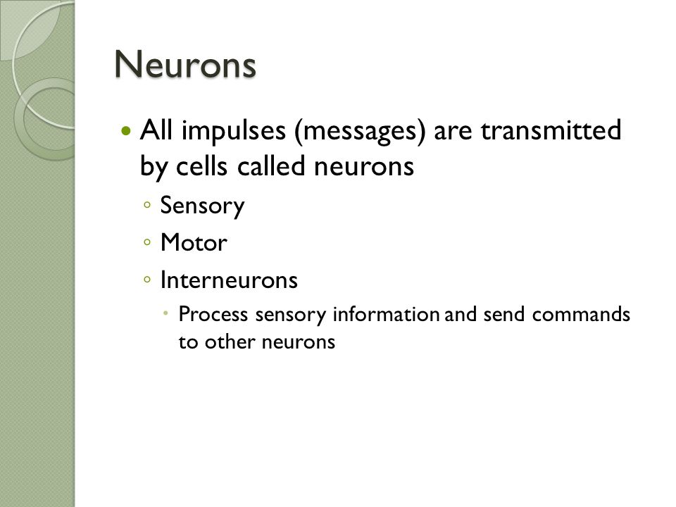 Neurons All impulses (messages) are transmitted by cells called neurons. Sensory. Motor. Interneurons.