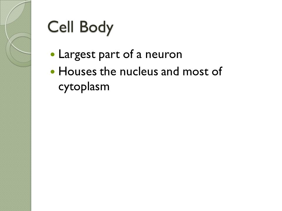 Cell Body Largest part of a neuron
