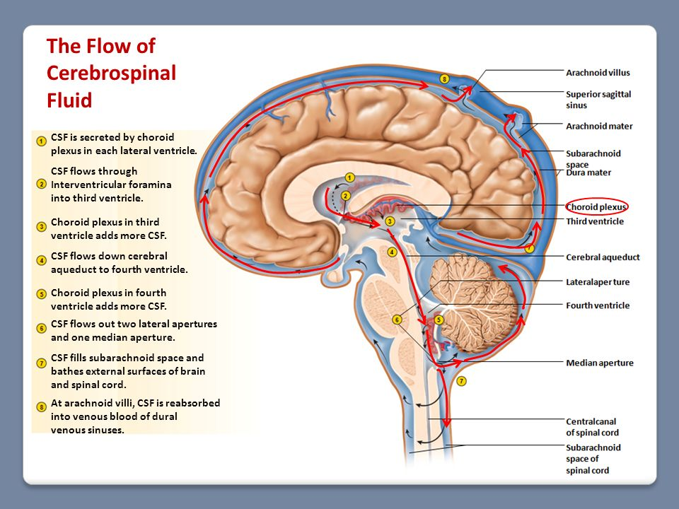 The Flow of Cerebrospinal Fluid