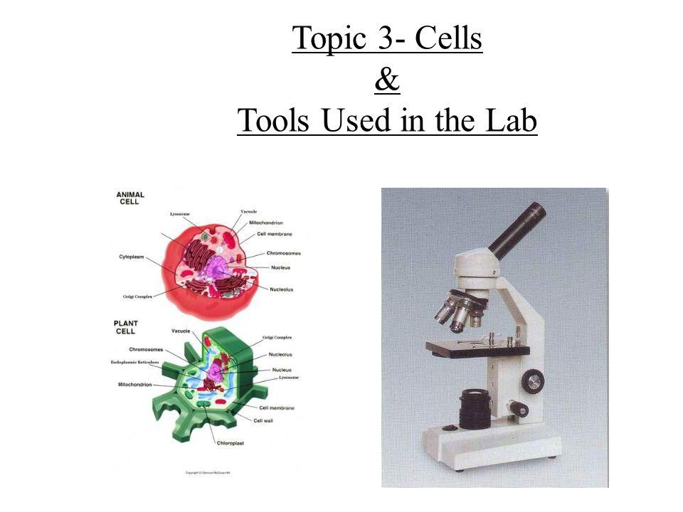 lab 3 cells