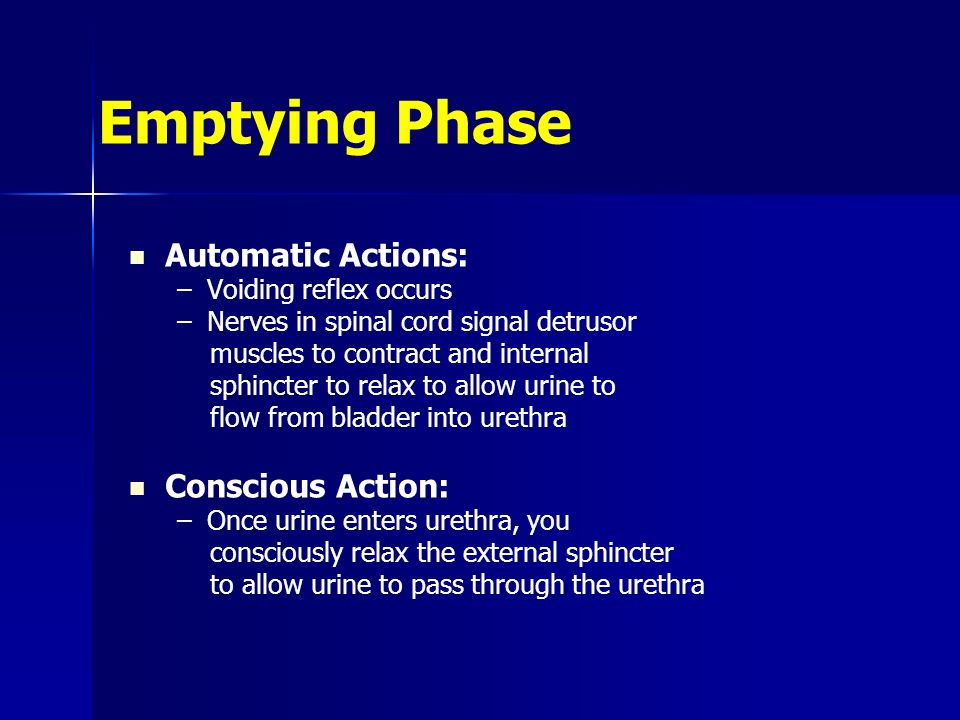 Emptying Phase Automatic Actions: Conscious Action:
