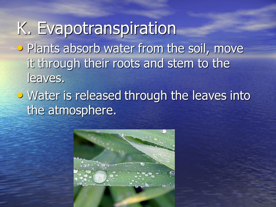 K. Evapotranspiration Plants absorb water from the soil, move it through their roots and stem to the leaves.
