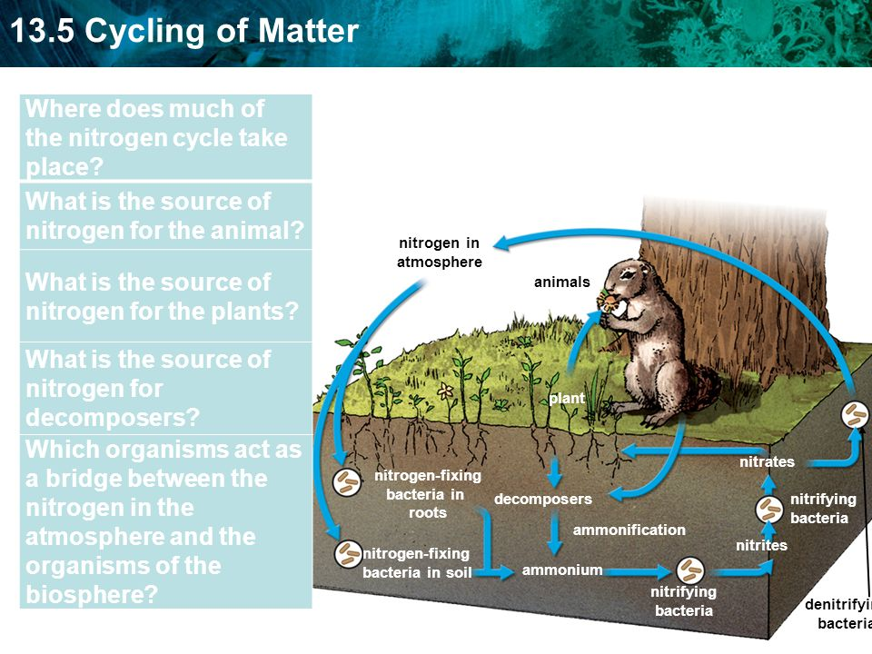 Where does much of the nitrogen cycle take place