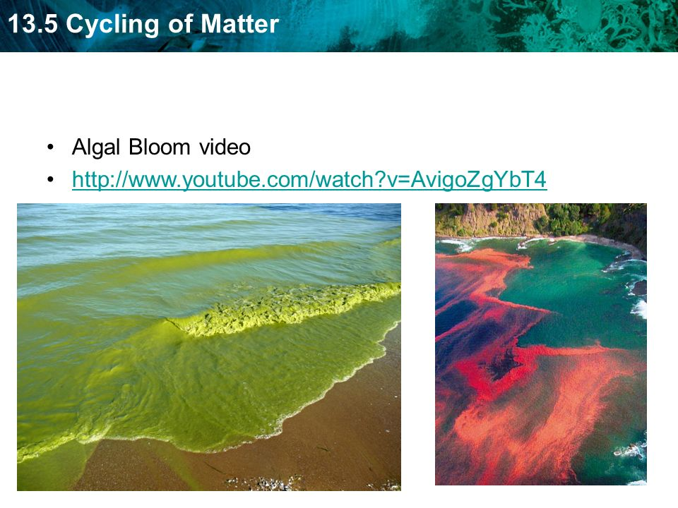 Algal Bloom video   v=AvigoZgYbT4