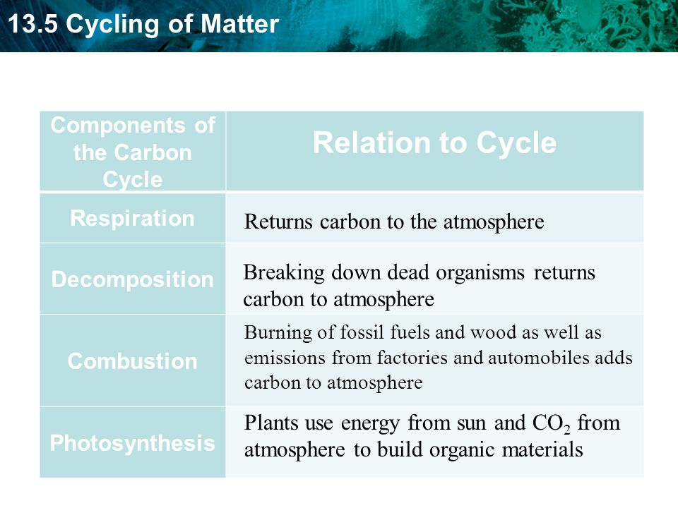Components of the Carbon Cycle