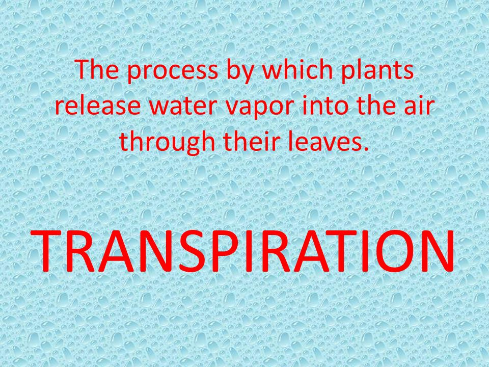 The process by which plants release water vapor into the air through their leaves.