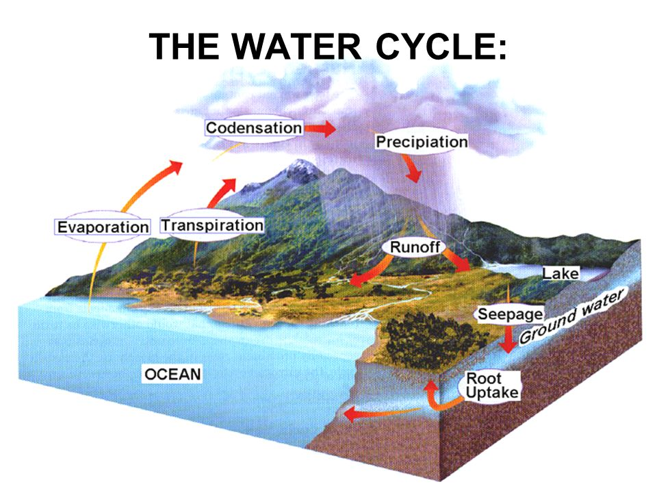 THE WATER CYCLE:
