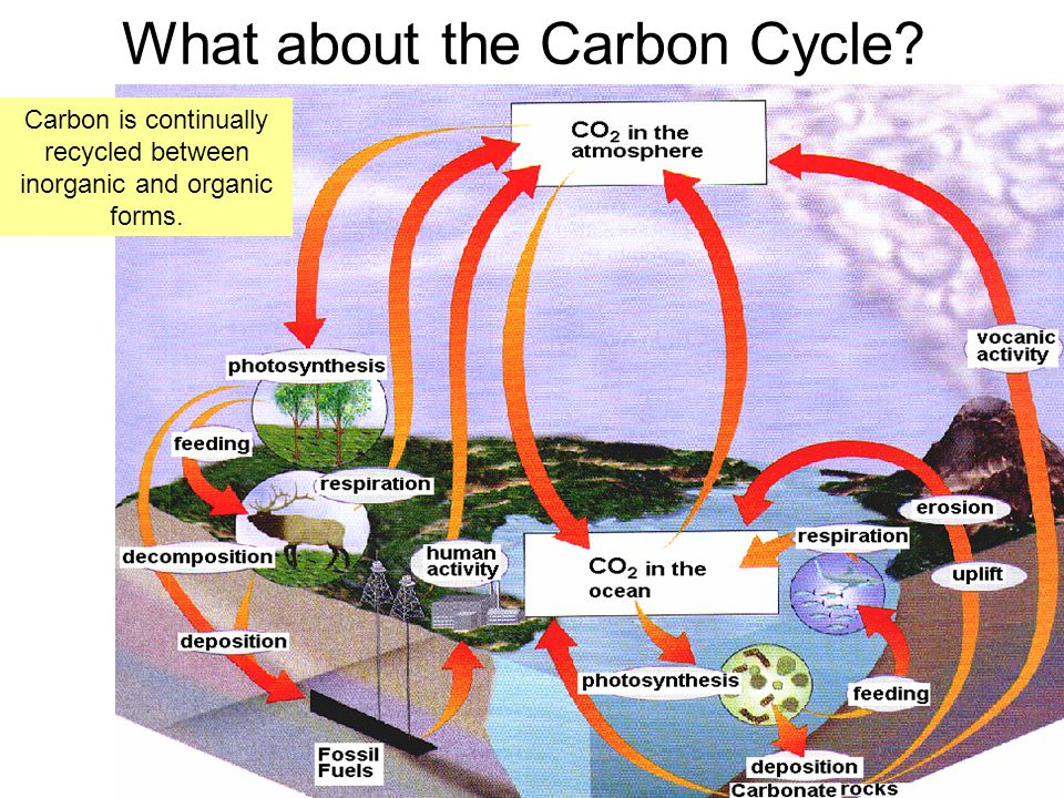 What about the Carbon Cycle