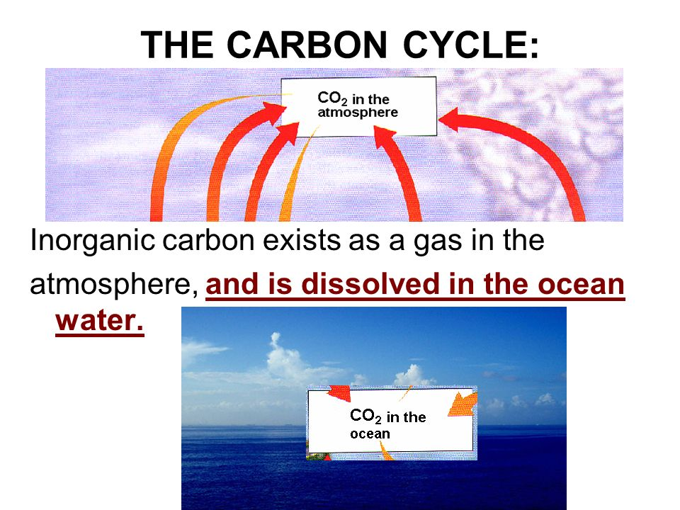 THE CARBON CYCLE: Inorganic carbon exists as a gas in the