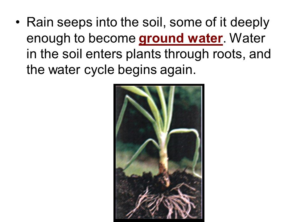 Rain seeps into the soil, some of it deeply enough to become ground water.