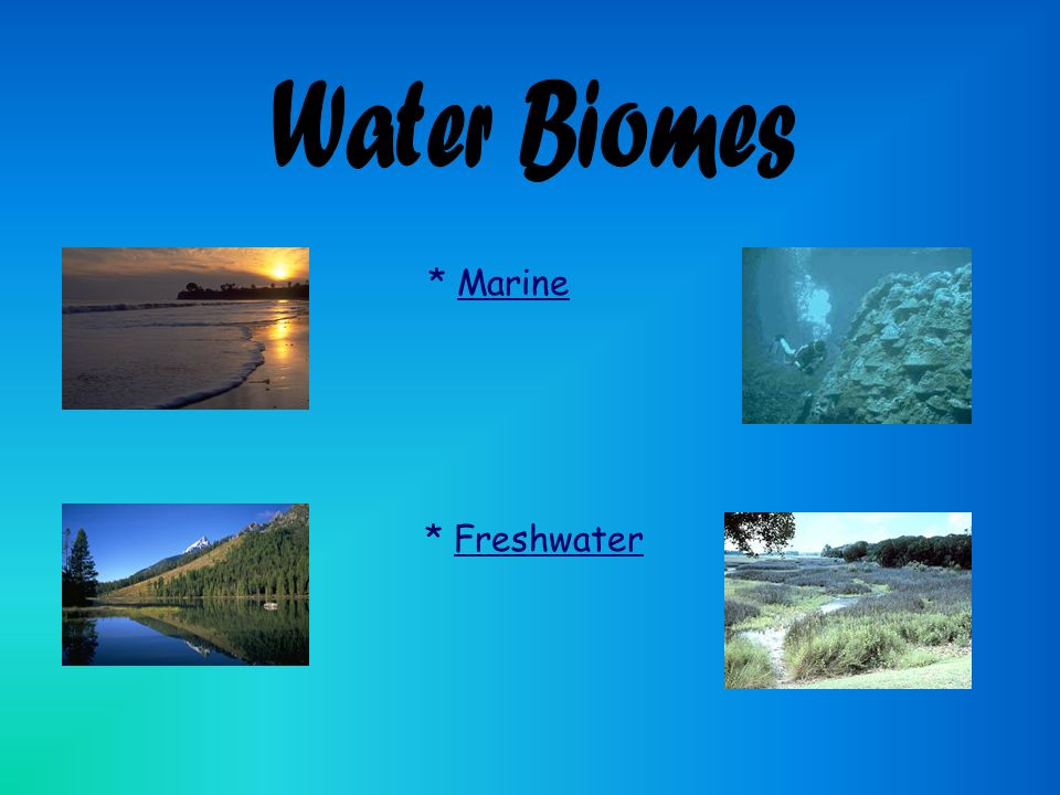 a research on water biomes An ecosystem is often much smaller than a biome, although the size varies ecosystems are the interactions between the living things and the nonliving things in a place in an.