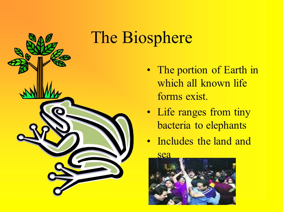 The Biosphere The portion of Earth in which all known life forms exist. Life ranges from tiny bacteria to elephants.