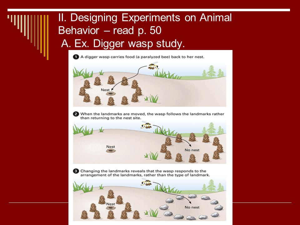 an experiment on animal behavior termite Nature and nurture are an inseparable blend of influences that work together to produce our behavior a growing band of researchers are demonstrating that the bedrock.