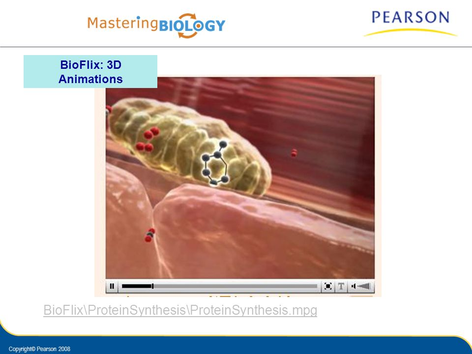 BioFlix: 3D Animations BioFlix\ProteinSynthesis\ProteinSynthesis.mpg