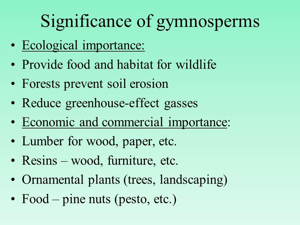Significance of gymnosperms