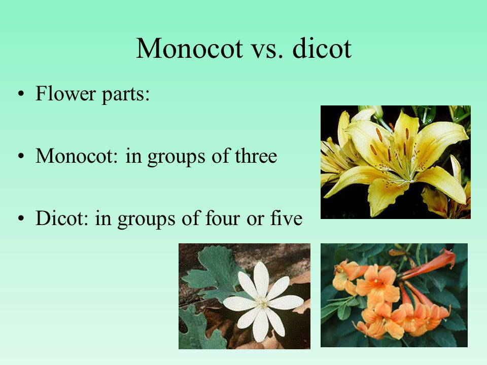 Monocot vs. dicot Flower parts: Monocot: in groups of three