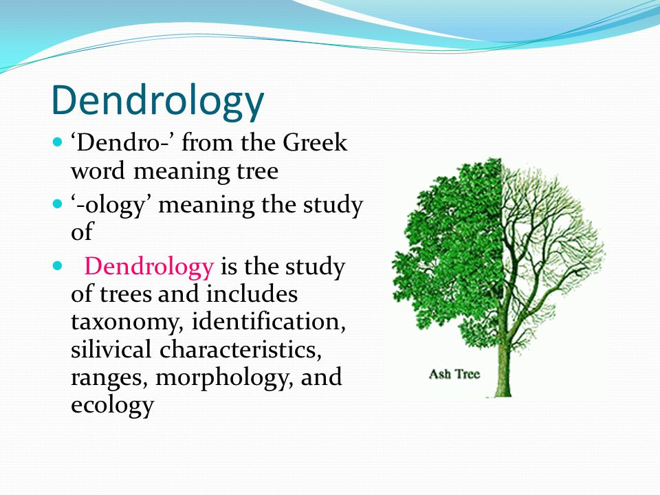 Dendrology Dendro From The Greek Word Meaning Tree Ppt Video