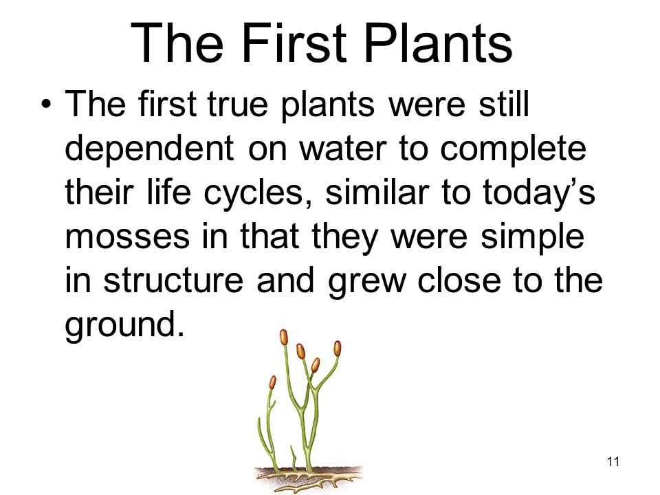 The First Plants