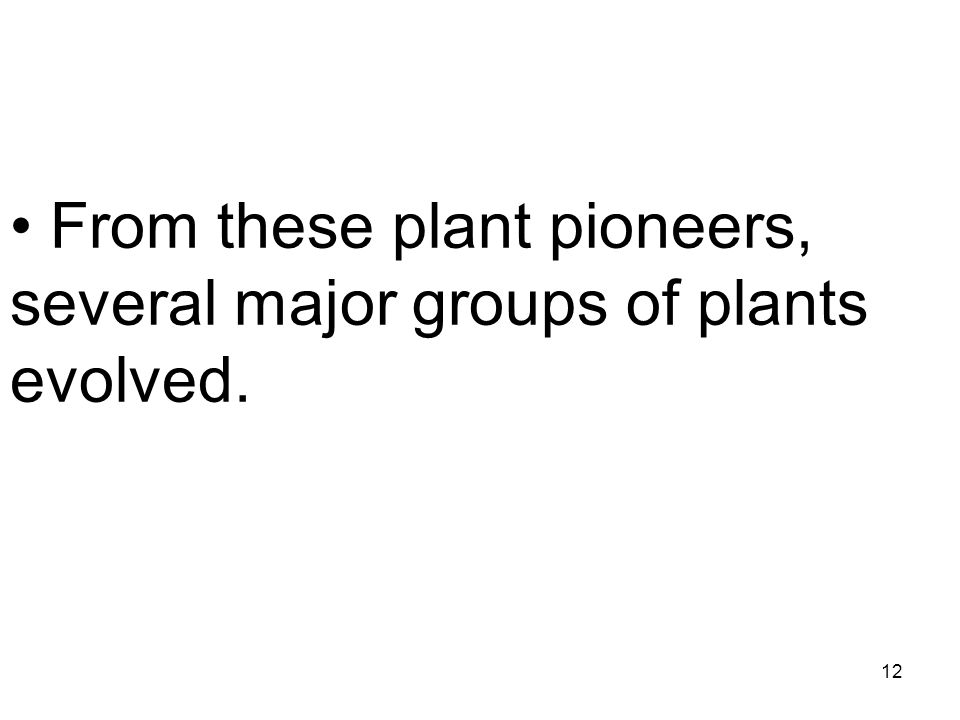 From these plant pioneers, several major groups of plants evolved.