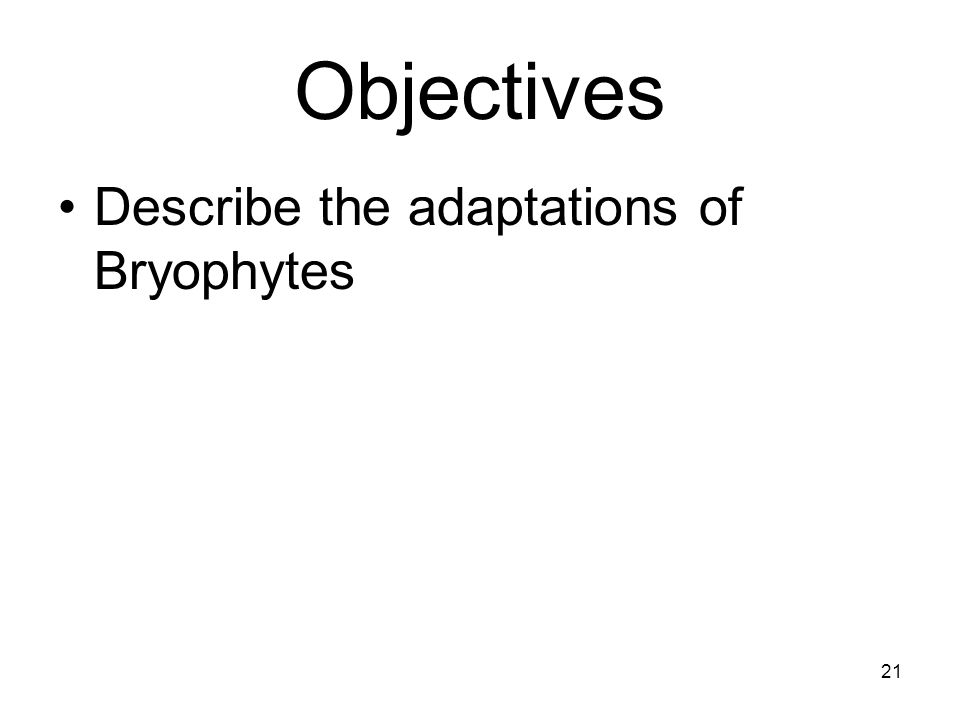 Objectives Describe the adaptations of Bryophytes
