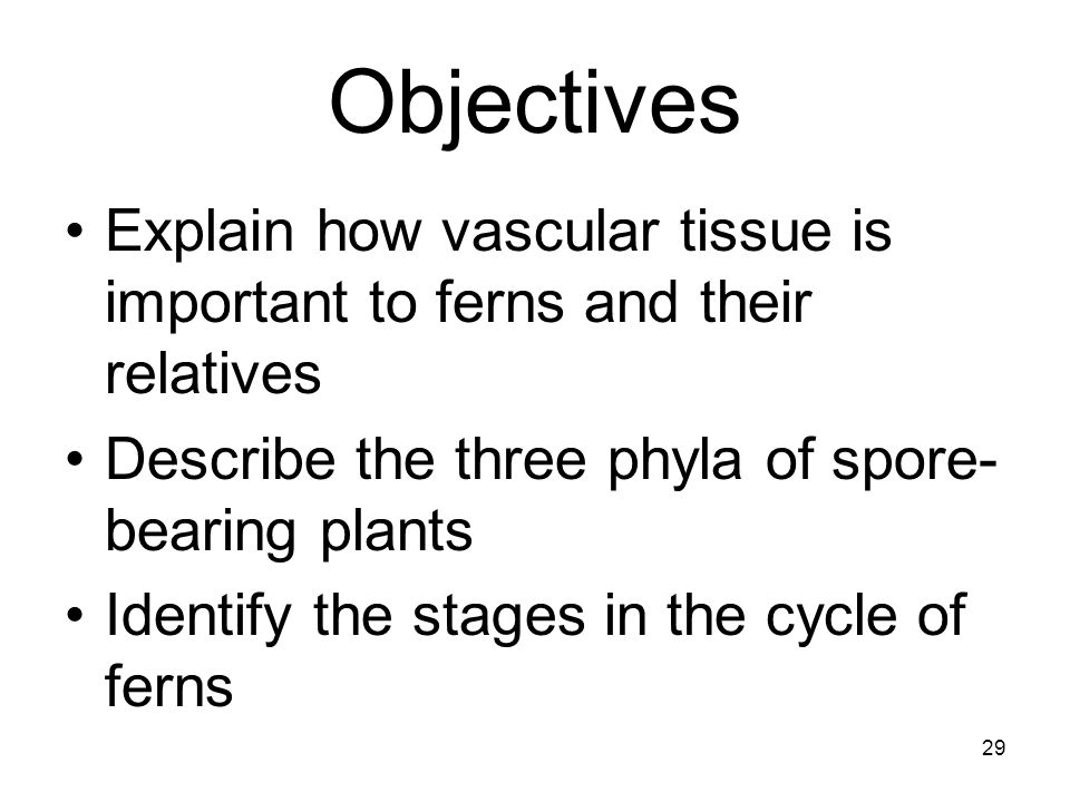 Objectives Explain how vascular tissue is important to ferns and their relatives. Describe the three phyla of spore-bearing plants.