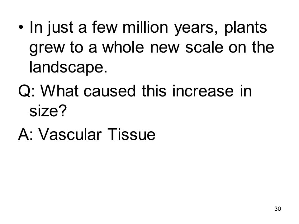 In just a few million years, plants grew to a whole new scale on the landscape.