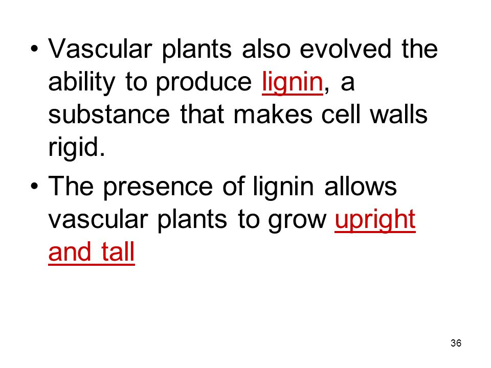 Vascular plants also evolved the ability to produce lignin, a substance that makes cell walls rigid.
