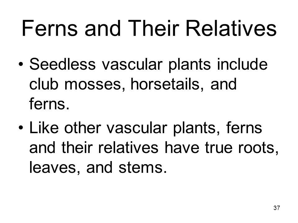 Ferns and Their Relatives