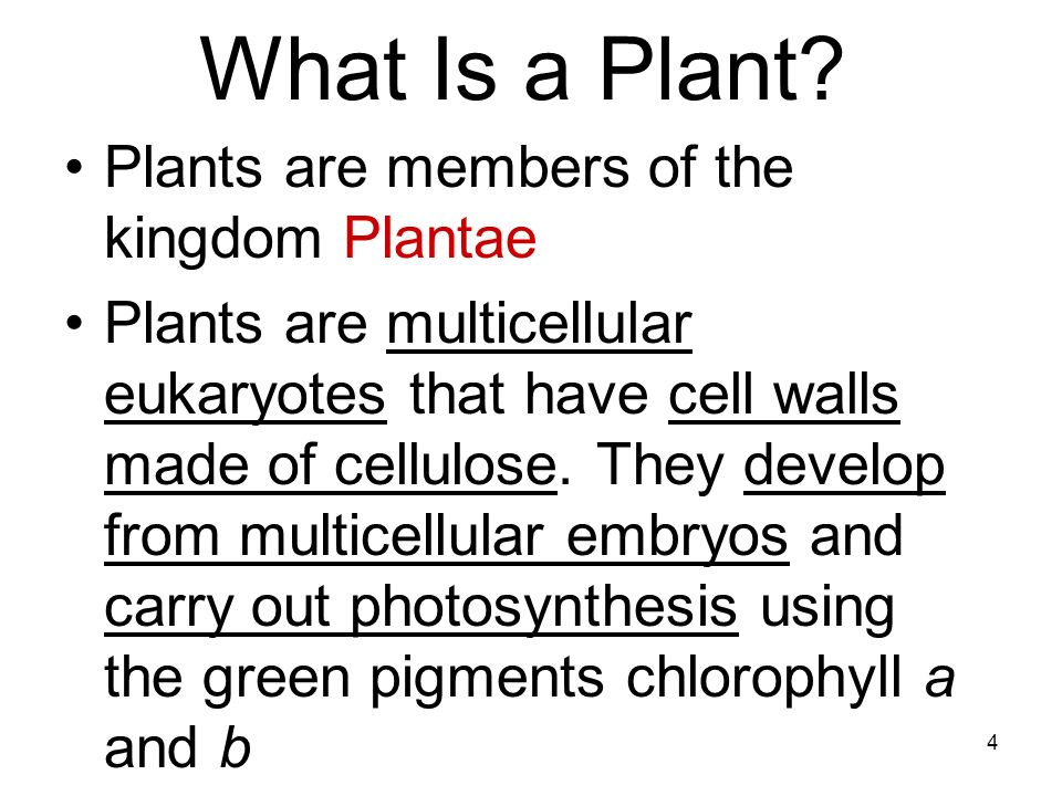 What Is a Plant Plants are members of the kingdom Plantae