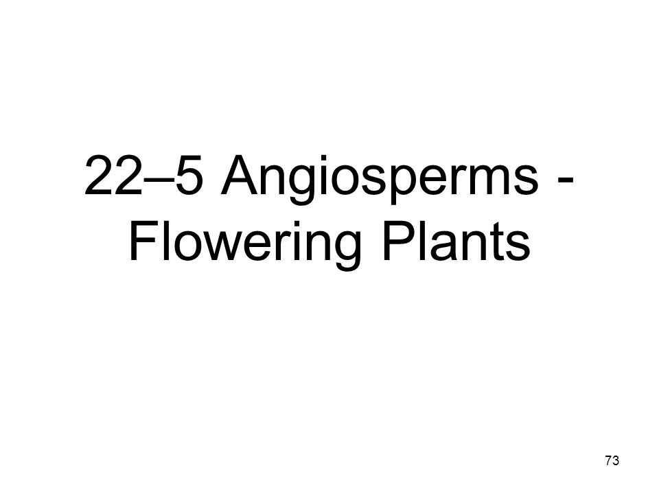 22–5 Angiosperms - Flowering Plants
