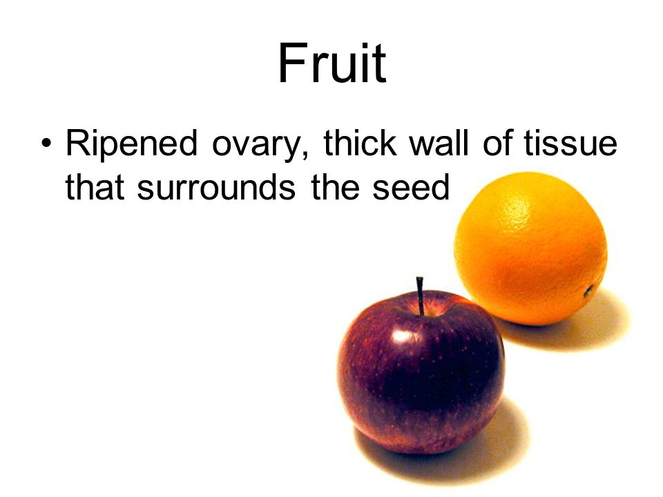 Fruit Ripened ovary, thick wall of tissue that surrounds the seed